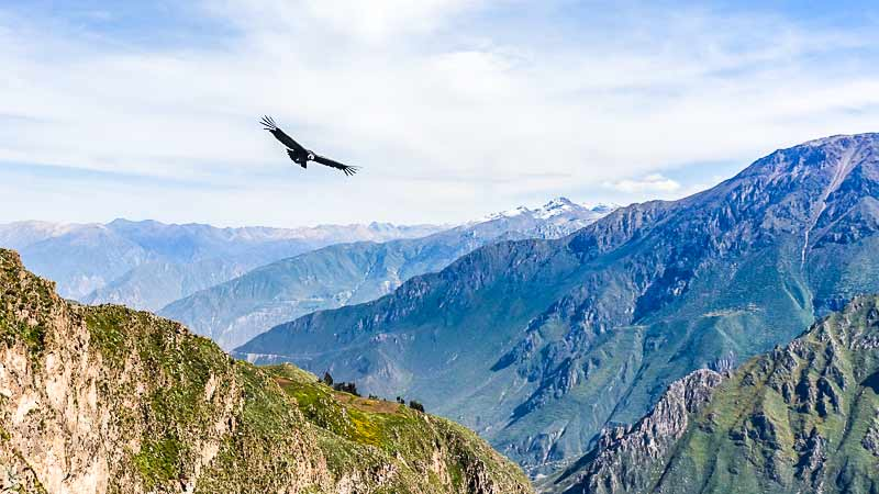 cusco puno colca canyon circuit machu picchu living tour 15 days