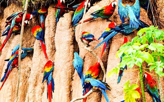 peru packages 21 days and inca trail and puerto maldonado tour